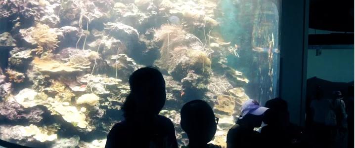 2017屏東國立海洋生物博物館形象CF